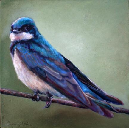 Zorro (Blue Swallow)