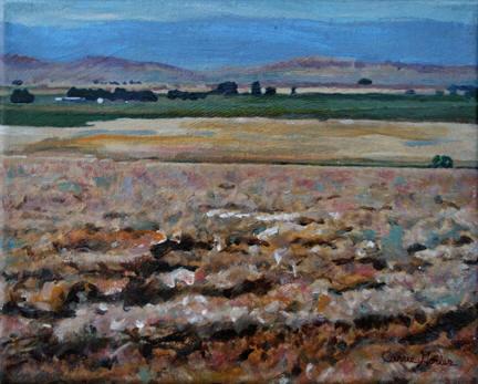 Wyoming Wheat