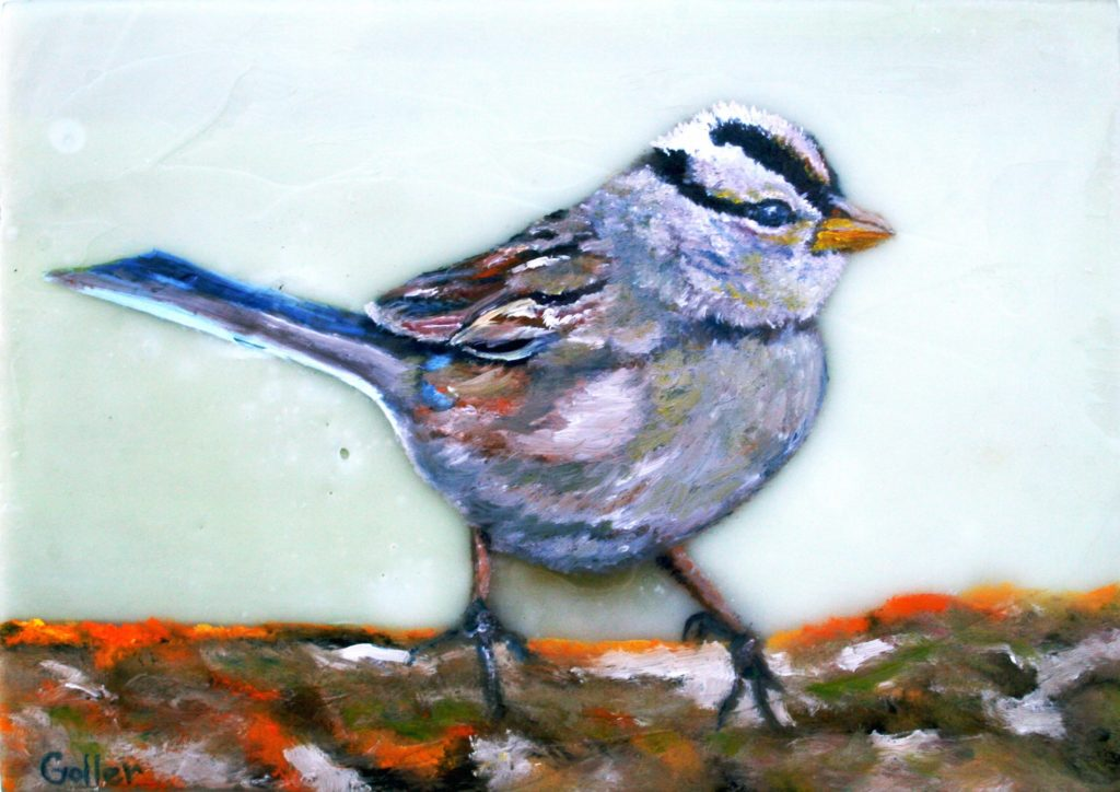 White Crowned Sparrow II