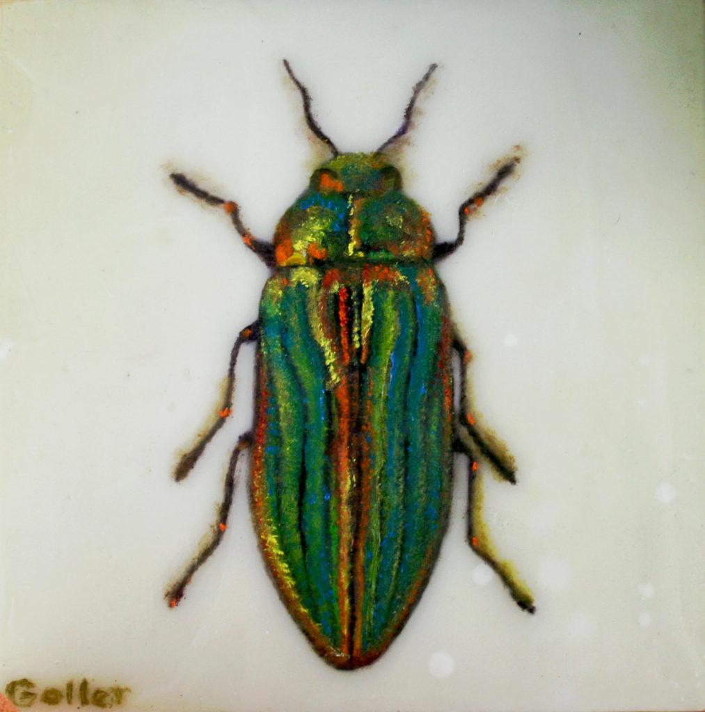 Buprestis  Aurulenta